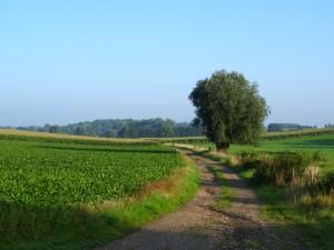 Glooiende Limburgse landschap - Wandelen Vuursteenroute