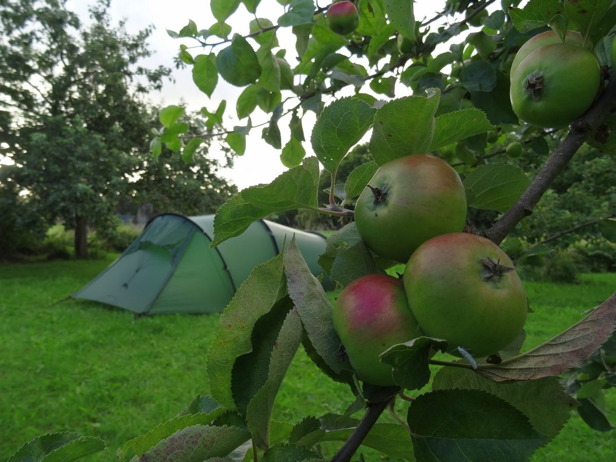 Camping In het fruit Laag Holland